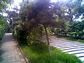 天心阁公园 - panoramio.jpg
