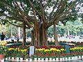 榕树 - panoramio.jpg