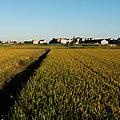 秋天的稻田 - panoramio.jpg