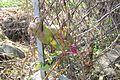 西天竜円筒分水群 20091115 C 14.jpg