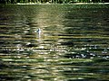 009 Lake Titicaca Peru 3056 (14995257197).jpg