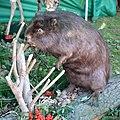 02014. Die Tiere von Waldkarpaten-002.JPG