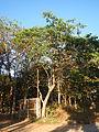 0581jfLandscapes Mabalas Diliman Salapungan Paddy fields San Rafael Bulacan Roadsfvf 11.JPG