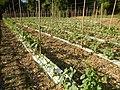 09681jfSan Rafael Bulacan Chapel Diliman Paddy Vegetable Fields Roadsfvf 06.JPG