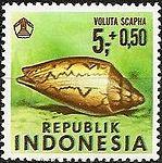 1969 Indonesia stamp Voluta scapha.jpg