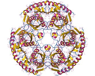 TRNA nucleotidyltransferase - RNase PH hexamer, Pseudomonas aeruginosa