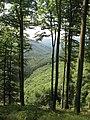20070517-20 Vosges du Nord (088).JPG