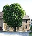2012-05-22 ND Kastanie im Schlosshof Neuenburg, Freyburg(Unstrut),SA 01.jpg