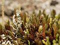 2012-11-16 14-37-41-lichen.jpg