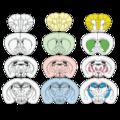 201311 mice brain slice.png