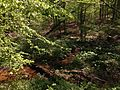 2014-05-11 11 39 48 View across a stream from the Bridges Trail in Clayton Park, Upper Freehold Township, New Jersey.JPG
