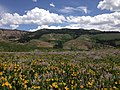 2014-06-24 12 16 44 View east across a field of wildflowers towards the Fox Creek Mountains from Elko County Route 748 (Charleston-Jarbidge Road) on the east side of Copper Basin, Nevada.jpg