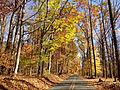 2014-11-02 13 43 41 View east along a wooded portion of Woosamonsa Road during autumn in Hopewell Township, New Jersey.JPG