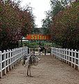 2014-12-02 14h14 Ostrich Farm anagoria.JPG