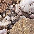 2015.07.11.-07-Mulde Eilenburg--Blaufluegelige Sandschrecke.jpg