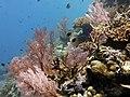 2015 09 Bali 61 pink garden (22067087596).jpg
