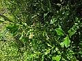 2016.05.28 10.16.34 DSC04451 - Flickr - andrey zharkikh.jpg