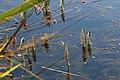 2016.09.02 07.59.24 IMG 7900 - Flickr - andrey zharkikh.jpg