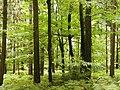 3314 Zgornje Gorče, Slovenia - panoramio.jpg