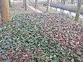 3634 Loenersloot, Netherlands - panoramio (41).jpg