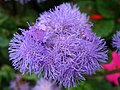 6395 - Luzern - Flowers.JPG
