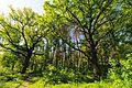 71-101-5007 Sosnivka Oaks DSC 5875.jpg
