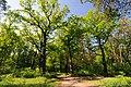 71-101-5007 Sosnivka Oaks DSC 5877.jpg