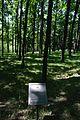 71-220-5076 Shevchenko Oaks SAM 7184.jpg
