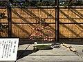 71st Nagoya Castle Chrysanthemum Exhibition 2018 02.jpg