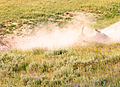 A bison wallow is a shallow depression in the soil edit 1.jpg