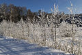 A frost. (4326191106).jpg