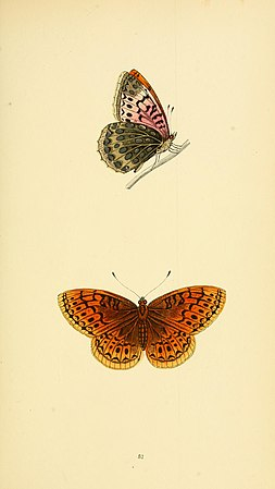 A history of British butterflies BHL14821326.jpg