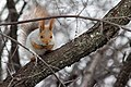 A squirrel in Botanical Garden of Professor I. S. Kosenko, Krasnodar.jpg