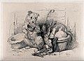 A terrier sits on his hind legs holding a bowl in his mouth Wellcome V0023222.jpg