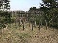 Abatis in Yoshinogari Historical Park 1.jpg