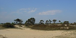 Aekingerzand Nationaal Park Drents-Friese Wold4.jpg