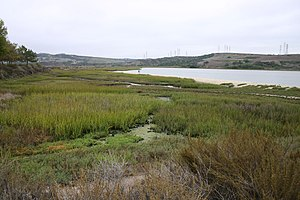 Agua Hedionda Lagoon - south end, looking south