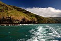 Akaroa Harbour NZ. (11883088544).jpg