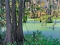 Alabama River Swamp (23995473987).jpg