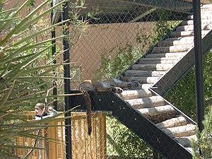 Alameda Park Zoo - Image: Alameda Park Zoo puma asleep on steps