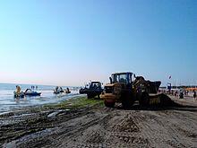 Automezzi al lavoro per lo smaltimento delle alghe nell'estate del 2013 a Pinarella di Cervia, Italia