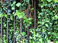 All Hallows Church Tottenham London England - churchyard overgrown tomb fence 3.jpg