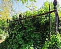 All Hallows Church Tottenham London England - churchyard overgrown tomb fence 4.jpg