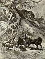 All about animals. Facts, stories and anecdotes (1900) (14775805504).jpg