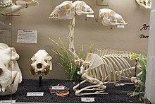 Alpaca - Wikipedia