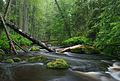 Altja jõgi Lahemaal.jpg