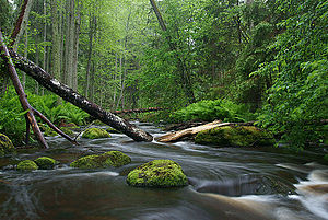 Nature photography - Natural sources are popular places for nature photography. Lahemaa National Park in Estonia.