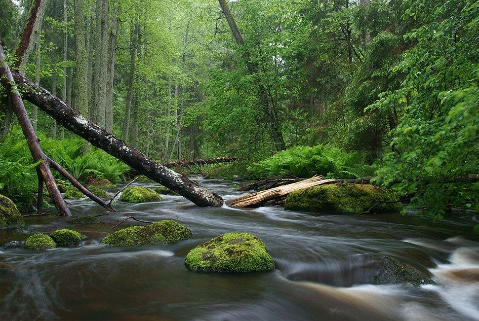 Altja jõgi Lahemaal
