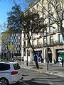 Alzina del passeig de Gràcia P1420893.JPG