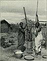 Am Tendaguru - Leben und Wirken einer deutschen Forschungsexpedition zur Ausgrabung vorweltlicher Riesensaurier in Deutsch-Ostafrika (1912) (18161783792).jpg